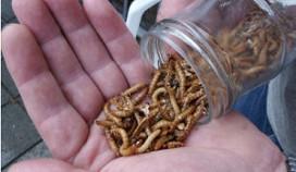 Snacks met insecten in verkoop bij Sligro