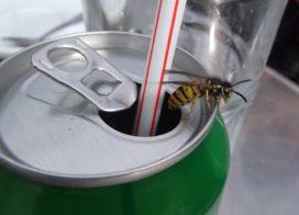 Wespenplaag verwacht: 11 tips om wespen te weren van het terras